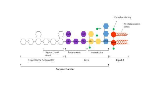 Lipopolysaccharide